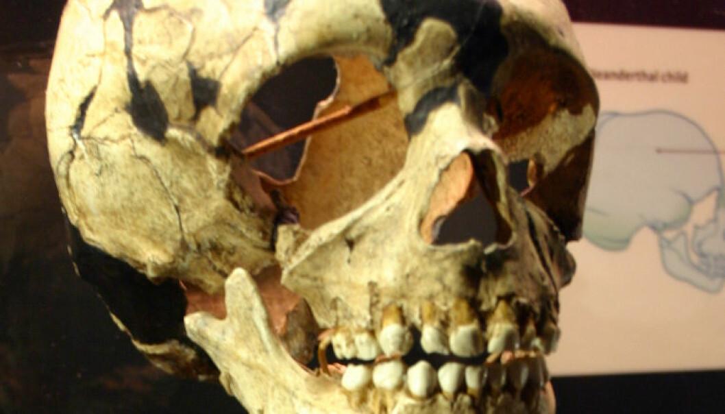 Ikke neandertalere likevel?