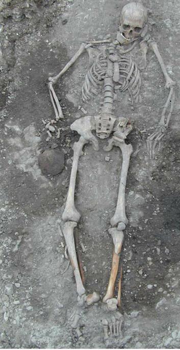 Hele det 4 700 år gamle skjelettet av ei jeger-samler-kvinne i 20-åra fra funnet på Gotland, Sverige. (Foto: Göran Burenhult)
