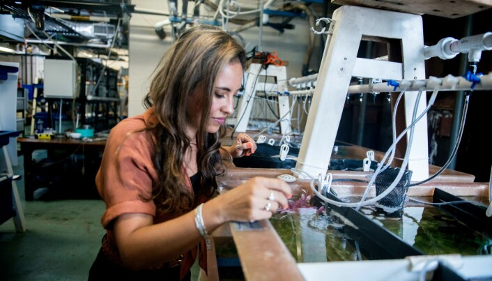 Alexandra Schnell sjekker en av deltagerne i forsøket, en sepiablekksprut .