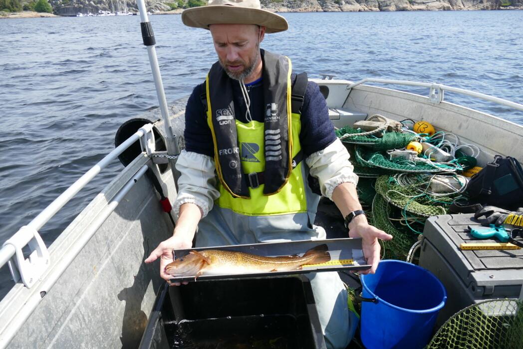 Even Moland er forsker ved Havforskingsinstituttet og vet mer enn de fleste om kysttorsken i Ytre Oslofjord.