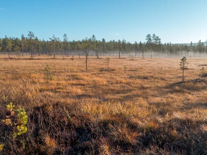 Det i dag strenge restriksjoner rundt nydyrking av myr.