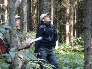 Forskerne studerer vekst og vitalitet på trær med tørkeskader på forsøksfeltet i Ås. (Foto: Severin Woxholtt / Skog og landskap)