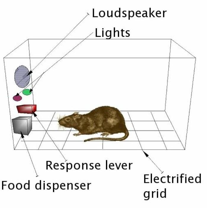 Her ser du en typisk Skinnerboks. Her får rotta en godbit når den gjør noe «riktig», mens den kan få strøm, i beina av å gjøre noe «feil».