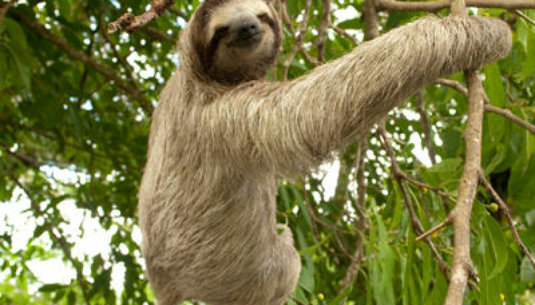 Dovendyr. Fotografert i Panama. iStockphoto