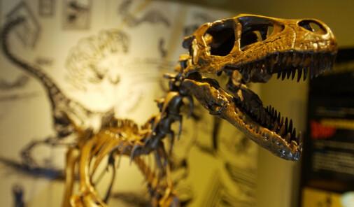 Storspiste unge dinosaurer forsynte seg grådig av matfatet