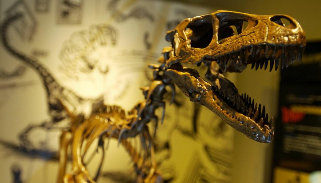Dette beistet av en Tyrannosaurus rex besøkte Oslo for noe år siden. Stan som den heter, var 13 meter lang i levende live.