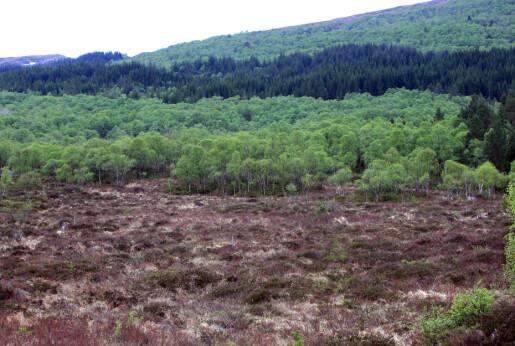 Hva betyr skogplanting i Norge?