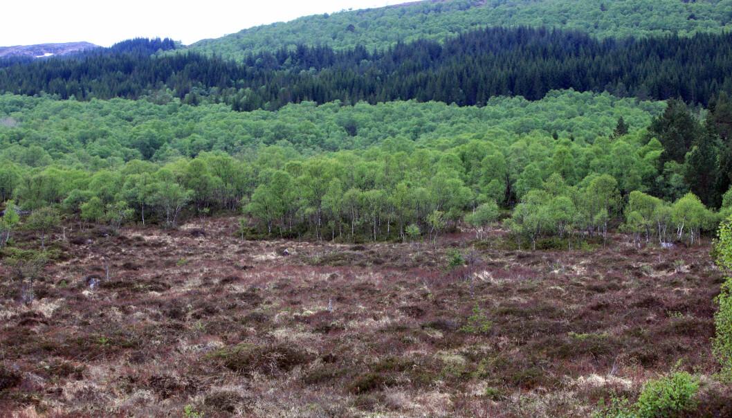 Hva betyr skogplanting i Norge, spør NIBIO-forsker Ryan Bright