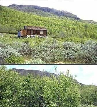 Inngrodd løvtreskog