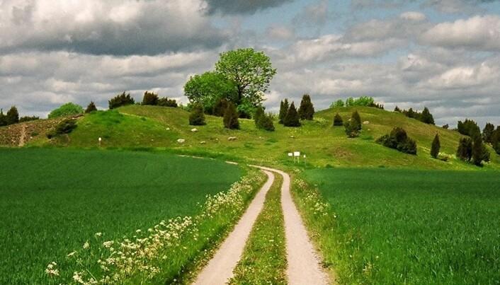 Båtgravene ligger to kilometer nord for Gamla Uppsala i Sverige.