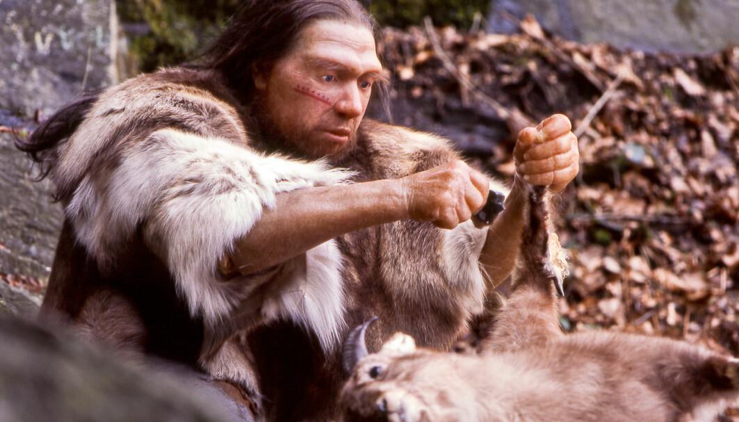 Spørsmålet om neandertalerne kunne snakke har blitt debattert i mange år. I en ny studie viser forskere at de i alle fall hadde hørselen til det.