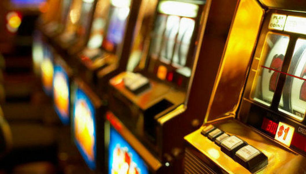 Studie på gambler-rotter gir håp om kur for spelavhengigheit