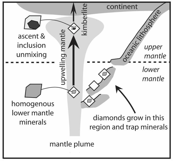 Figuren viser hvordan diamanter og inneslutninger dannes i havskorpe som har sunket ned i den nedre mantelen. Deretter blir de transportert opp til den øvre mantelen, og seinere til overflaten i kimberlitt-magma. (Foto: (Figur: Science/AAAS))