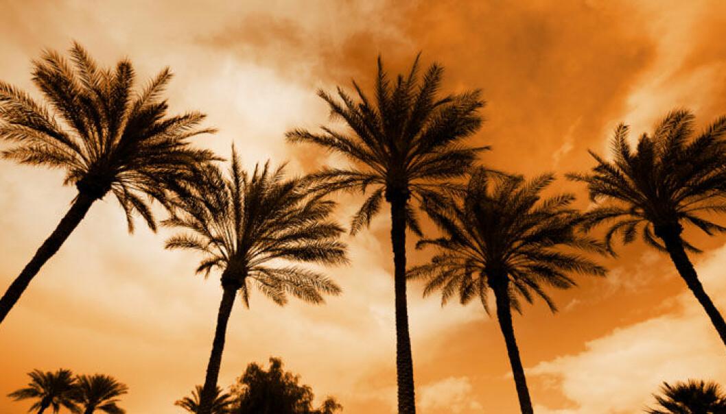 Klimaendringer rammer palmer