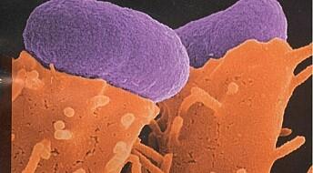 Frykter flere E. coli-problemer