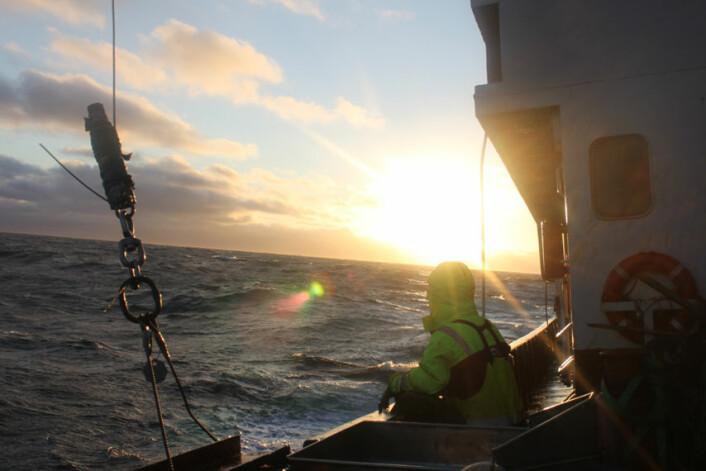 På tokt i Barentshavet sommeren 2010. (Foto: Akvaplan-NIVA)
