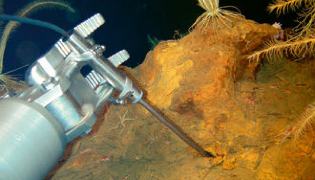 """""""Samspill: Samspillet mellom geosfæren og biosfæren er sentralt for Senter for geobiologi. Her ser vi samspillet i praksis. Når varmt vann strømmer ut av havbunnen, danner bakterier jernutfellinger. Her stikker robotarmen en temperatursonde inn i de rustfargede utfellingene."""""""