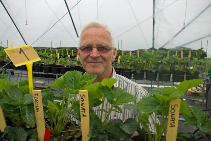 Få bæra under tak, rår Arnfinn Nes hos Bioforsk. (Foto: Georg Mathisen)