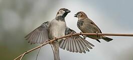 Fugletelling er folkeforskning. Nå vil forskerne bruke dataene på best mulig måte