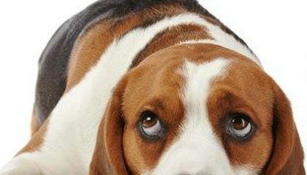Hunder viser følelser med ansiktet