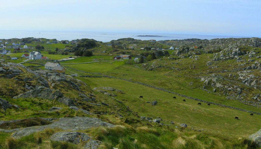 Lyngheier er blant landskapene nordmenn generelt foretrekker, her fra Utsira.