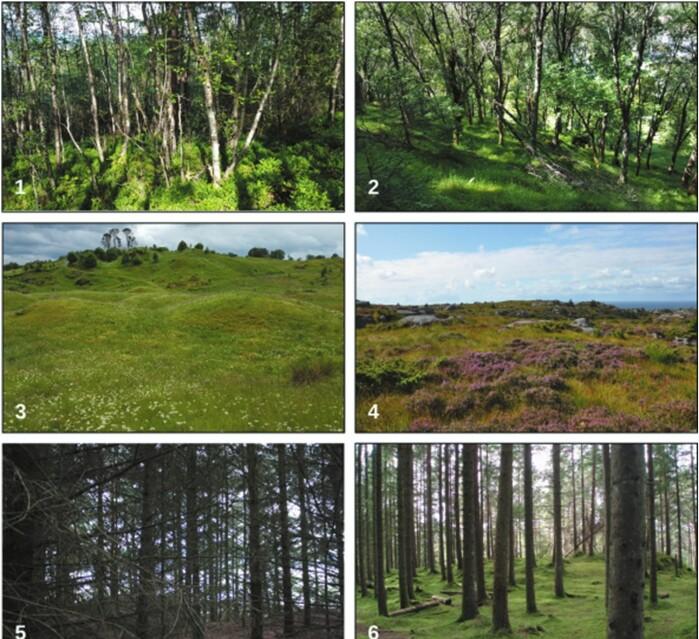 Fotografier brukt i studien. Hva synes du er vakrest? 1. Ung blandingsskog (i gjengroing), 2. Gammel blandingsskog, 3. Beitemark, 4. Lynghei, 5. Ung plantet granskog, 6. Gammel plantet granskog.