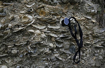 Making sense of quantitative studies of the fossil record