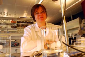 I et laboratorium på Framsenteret i Tromsø prøver Seniorforsker i NILU, Dorte Herzke å løse et mysterium, hvor det mystiske PFAS kommer fra. (Foto: Helge M. Markusson, Framsenteret)