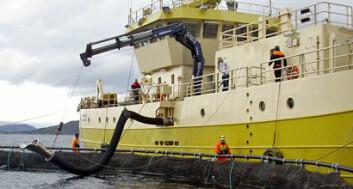 """Prosessfartøyet B/B """"Tauranga"""" ved merd klar til å slakting. (Foto: Kjell Ø. Midling/Nofima)"""