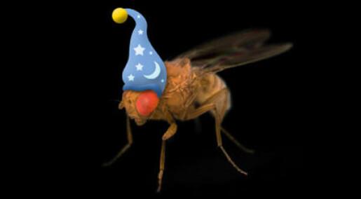 Unge fluer må sove lenge