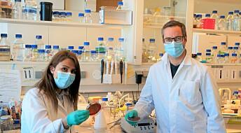 Bakterier kan gjemme seg for immunforsvaret