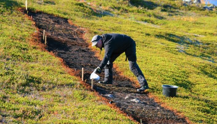Kreklingjord kalkes for å øke jordas pH. Kreklingen har giftstoffer i bladene som skaper dårlige vekstvilkår for andre planter.