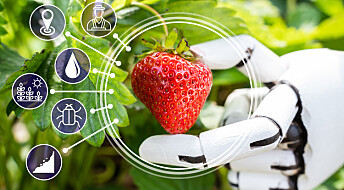 Med roboter i åkeren får du de beste jordbærene