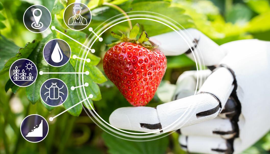 Et nytt forskningsprosjekt skal utvikle smarte sensorløsninger for å sjekke kvaliteten på maten både på gården og fabrikken.