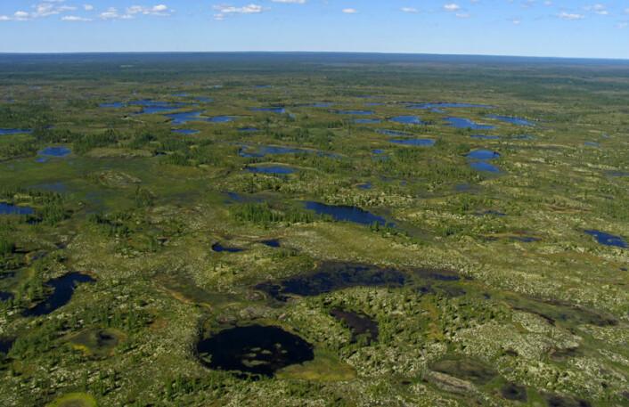 Store deler av Arktis, som her i Sibir, er dekket av tundra. (Foto: iStockphoto)