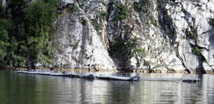 12 oppdrettanlegg for laks ble knust av flodbølgene i 2007. Millioner av laks rømte fra merdene. (Foto: Iain Henderson/NGU)