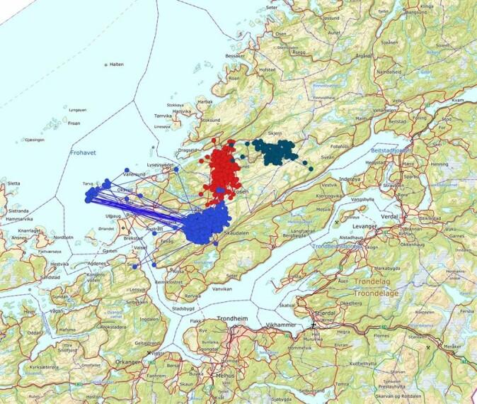 Kartet viser bevegelsene til de tre territorielle kongeørnene som ble merket i prosjektet.