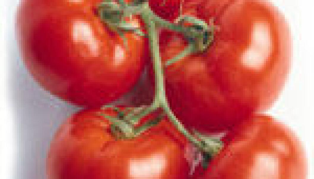 Tomat og brokkoli mot prostatakreft