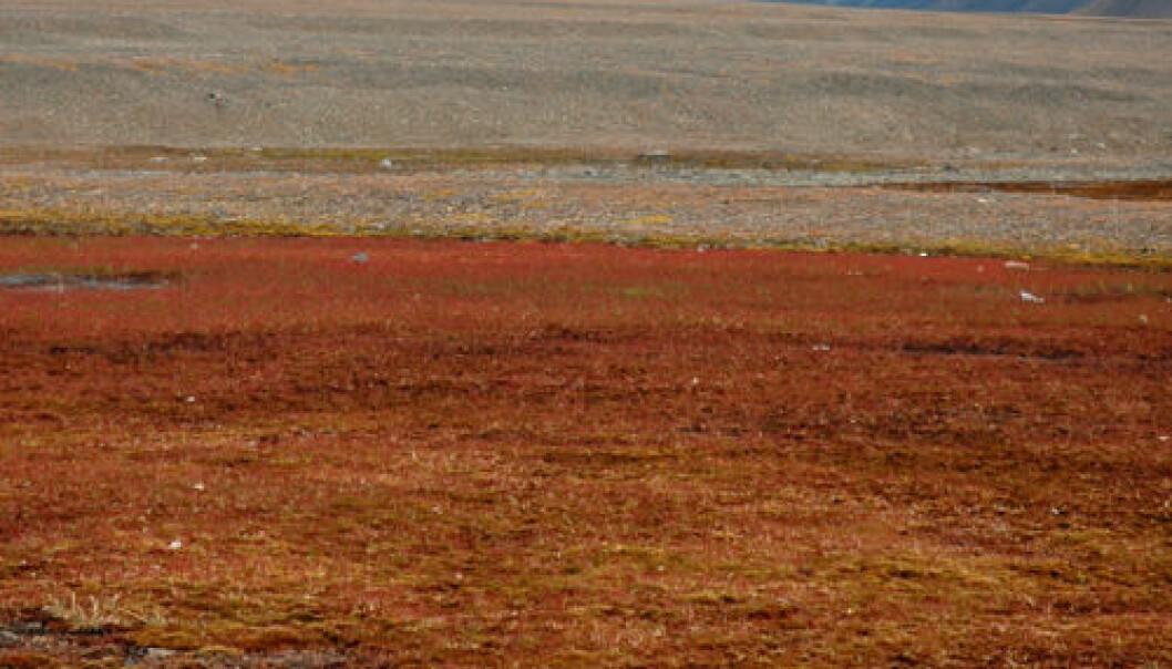 Svalbard. iStockphoto