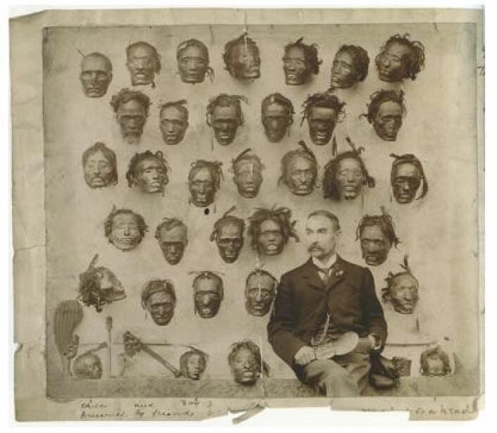 Major General Horatio Gordon Robleys samling av krympede maorihoder fra New Zealand. Mange av disse hodene befinner seg fremdeles i samlinger rundt i verden. (Foto: Maias/Wikimedia Commons)