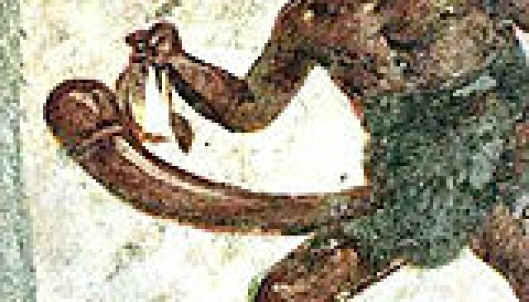 """""""Denne figuren fra utgravingene i Pompeii er laget for å virke komisk. I oldtidens Roma var en stor penis lite ønskelig og ble betraktet som latterlig."""""""