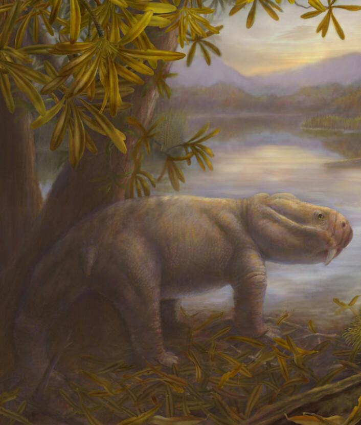 Dicynodon, her framstilt av en tegner, hørte til en dominerende gruppe planteetere i perioden perm. Etter masseutryddelsen var denne gruppa ikke lenger tallrik. Dette ga rom for at andre konkurrerende planteetere fikk en sjanse til å hevde seg. Dicynodon var på størrelse med en gris og skal ha sett ut som en feit øgle med kort hale og skilpaddehode. (Foto: (Illustrasjon: Marlene Donnelly/Field Museum of Natural History))