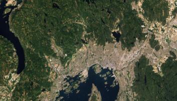 Oslo er også en skogsnær by