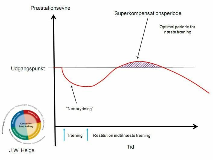 Superkompensasjonsprinsippet brukes av mange fagfolk til å beskrive når det er optimalt å legge treningen. Les mer i boksen under artikkelen: «Stor forvirring om begrepene». (Foto: (Figur: Jørn Wulff Helge))