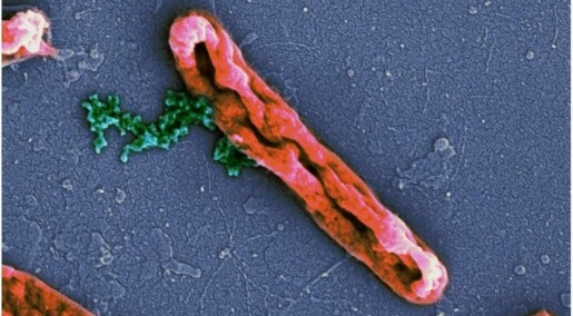 Bitte små molekyler i kroppen kan bekjempe bakterier