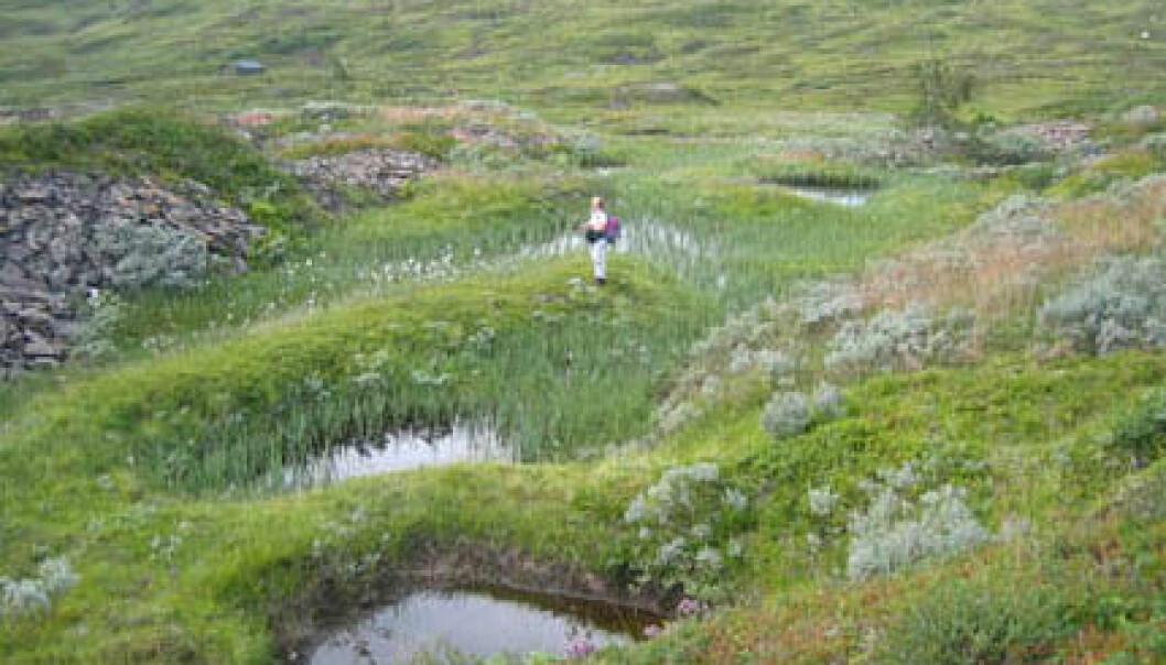 """""""Torvdekte skrottipper langs kanten av små vannfylte bruddgroper, kanskje fra den eldste driften i Høgfjellet. De gamle bruddene dekkes delvis av nyere skrottipper til venstre i bildet."""""""