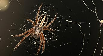 Edderkopper satser på variert kosthold