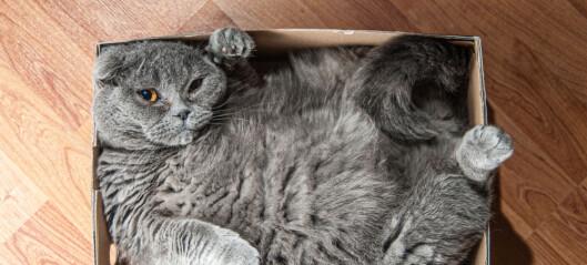 Kvantefysikk: Hva kan vi egentlig bruke Schrödingers katt til?