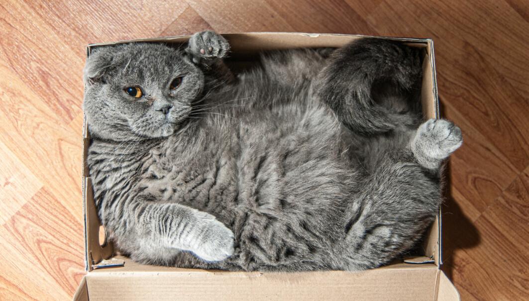 Hva skjer med katten når boksen lukkes?