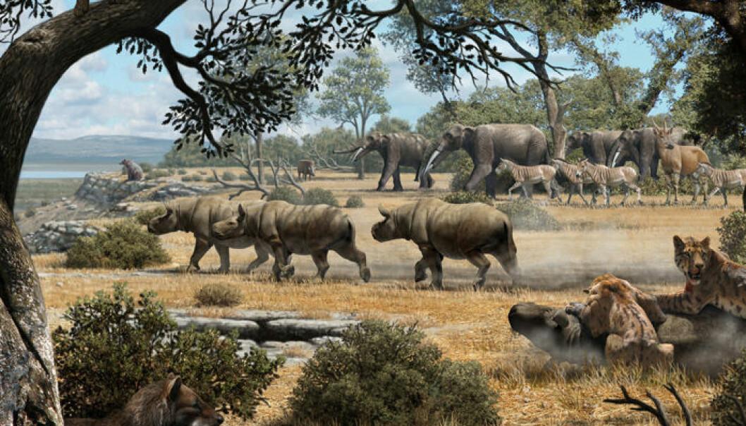 Omtrent slik kan områdene ved Cerro de los Batallones midt i Spania ha sett ut for ni millioner år siden. Mauricio Antón